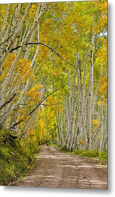 Leaning Aspens Metal Print by Marta Alfred