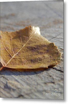 Leaves Metal Print by Jennifer Kimberly