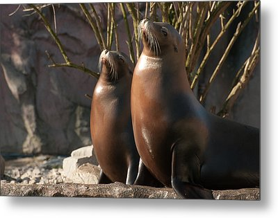 Metal Print featuring the photograph Let's Sing by Sabine Edrissi