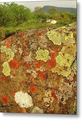 Lichen Growing On Rock In Unpolluted Air Metal Print by Cordelia Molloy