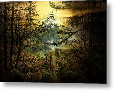 Life In The Forest Metal Print by Gary Smith