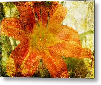 Lilly Metal Print by Steven  Michael