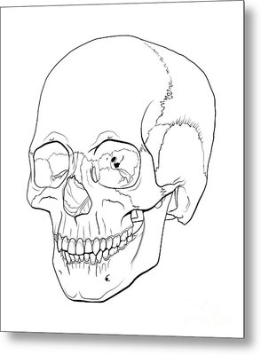 Line Illustration Of A Human Skull Metal Print by Nicholas Mayeux