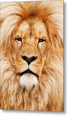 Lion Portrait Metal Print by Tilen Hrovatic