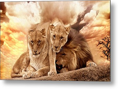 Lions Metal Print by Christine Sponchia