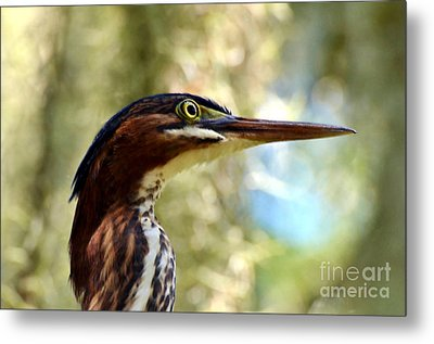 Metal Print featuring the photograph Little Green Heron Portrait by Kathy Baccari