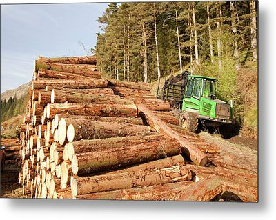 Logging On The Slopes Above Thirlmere Metal Print