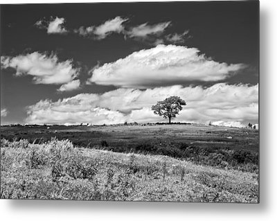 Lone Tree And Sky In Blueberry Field Maine Photograph  Metal Print by Keith Webber Jr