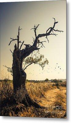 Lonely Tree Metal Print by Carlos Caetano