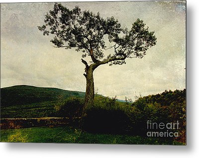 Metal Print featuring the photograph Lonely Tree by Trina  Ansel