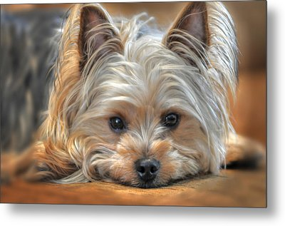 Looking At You Metal Print by Don Wolf