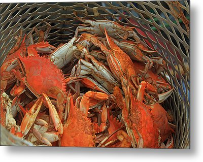 Louisiana Boiled Crabs Metal Print