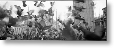 Low Angle View Of A Flock Of Pigeons Metal Print