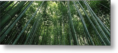 Low Angle View Of Bamboo Trees Metal Print by Panoramic Images
