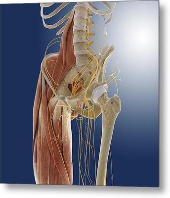 Lower Body Anatomy, Artwork Metal Print