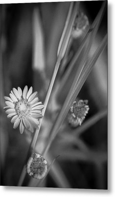 Metal Print featuring the photograph Loxahatchee Flower by Bradley R Youngberg