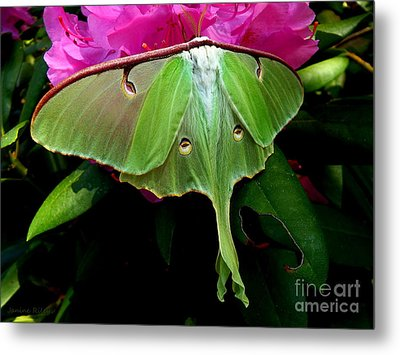 Lady Luna Moth Metal Print by Janine Riley