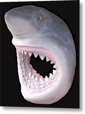 Mack The Shark Metal Print
