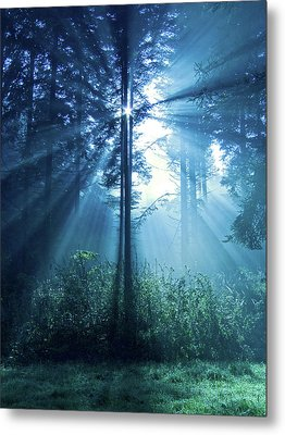 Magical Light Metal Print by Daniel Csoka