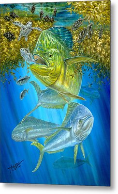 Mahi Mahi Hunting In Sargassum Metal Print by Terry  Fox