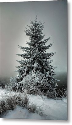 Majestic Winter Metal Print by Heather  Rivet