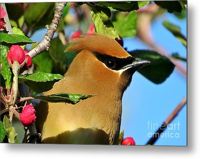 Masked Bandit Metal Print by Michele Penner