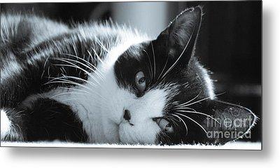 Max The Cat Metal Print by David Warrington