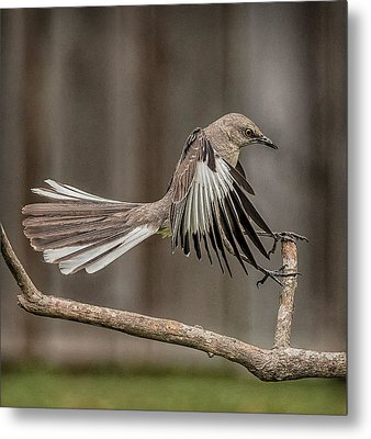Mockingbird  Metal Print by Rick Barnard