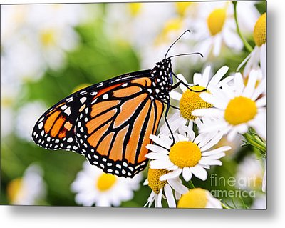 Monarch Butterfly Metal Print by Elena Elisseeva