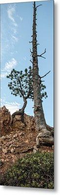 Monumental Ponderosa Pine Metal Print by R J Ruppenthal