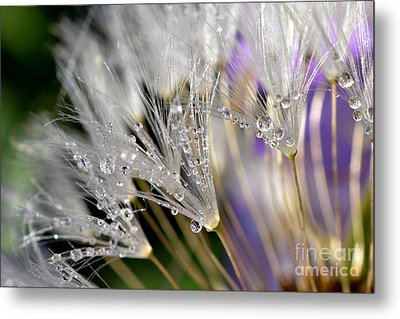 Morning Dew Metal Print by Lila Fisher-Wenzel