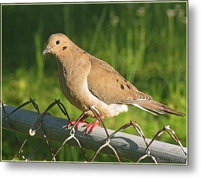 Morning Dove I Metal Print by Debbie Portwood