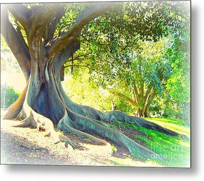 Morton Bay Fig Tree Metal Print by Leanne Seymour