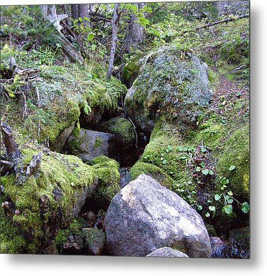 Moss Covered Creek Metal Print