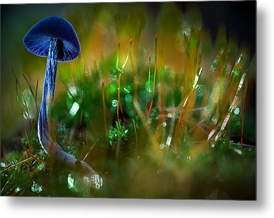 Mushroom Magic Metal Print by Dirk Ercken