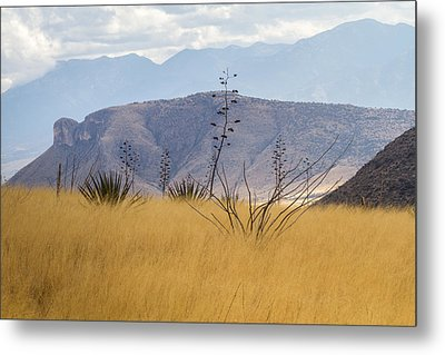 Mustang View Metal Print by Beverly Parks