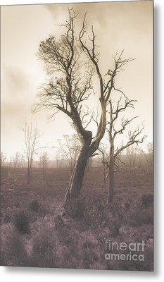 Mystery Tree In A Dark Scary Forest Metal Print