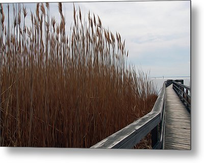 Metal Print featuring the digital art Nature Walk by Kelvin Booker