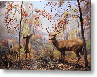 New York City American Museum Of Natural History Collection Metal Print