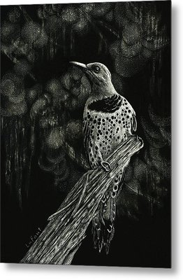 Northern Flicker Metal Print by Sandra LaFaut