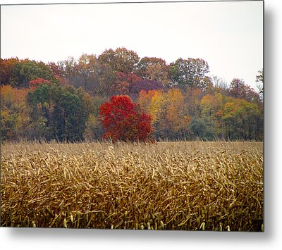 November Metal Print by Andrea Dale