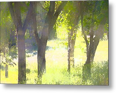 Oaks 25 Metal Print by Pamela Cooper