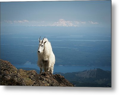 Olympic National Forest, Mount Ellinor Metal Print