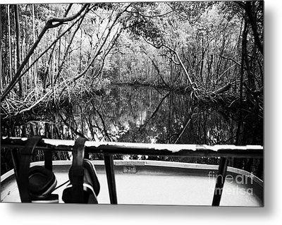 On Board An Airboat Ride Through A Mangrove Jungle In Everglades City Florida Everglades Metal Print