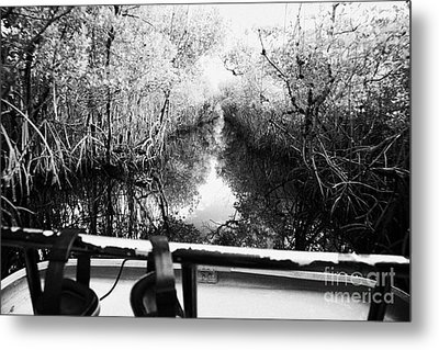 On Board An Airboat Ride Through A Mangrove Jungle In Everglades City Florida Everglades Usa Metal Print