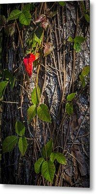 One Red Leaf Metal Print by Marvin Spates