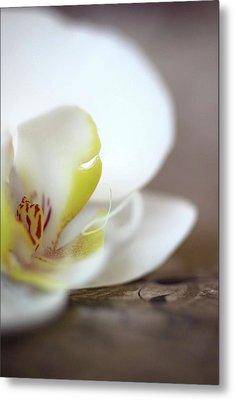 Orchid Metal Print by AR Annahita