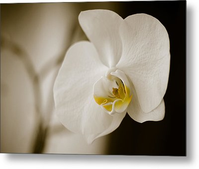 Orchid Metal Print by Ivelin Donchev