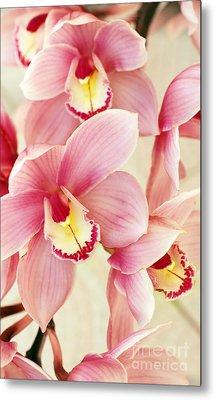 Orchids Metal Print by Carlos Caetano
