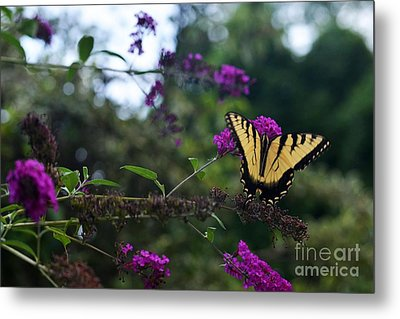 Metal Print featuring the photograph Out Of Bounds II by Judy Wolinsky
